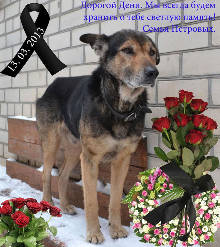 Deni Memorial Photo, Дени наш любимый пёсик.