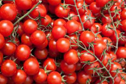 Danish organic food - Tomatoes