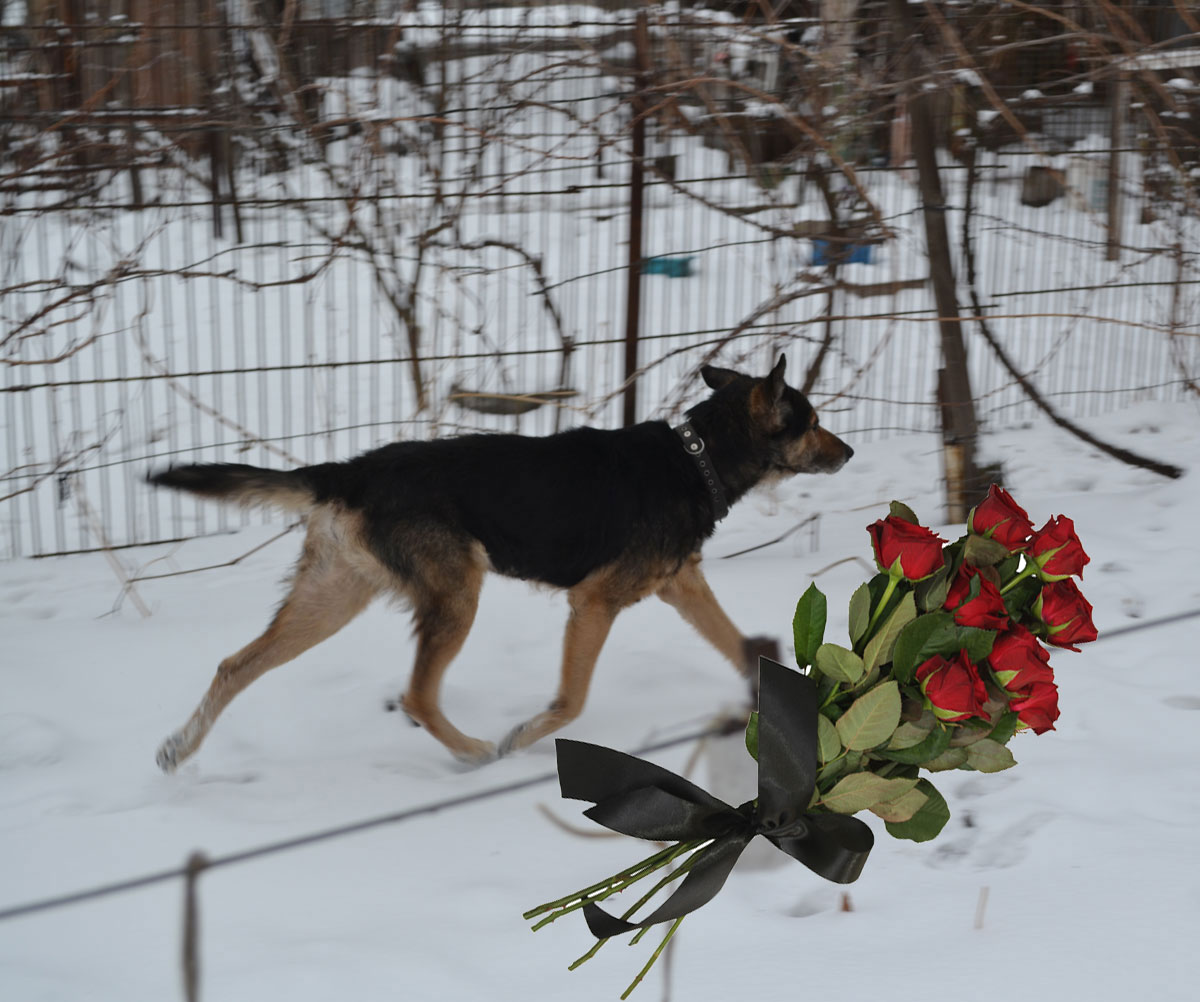 Deni - our lovely dog
